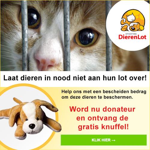 stichting dierenlot, steun dieren in nood!