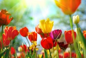 wehkamp voorjaar