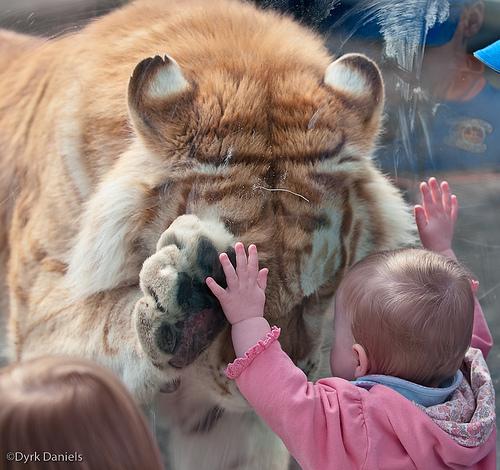 dierentuin babyfoto